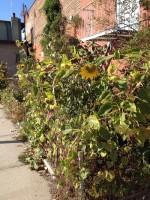 Gowanus_flowers